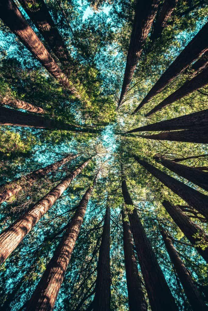 trees at daytime